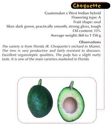 Main commercial varieties of Avocado